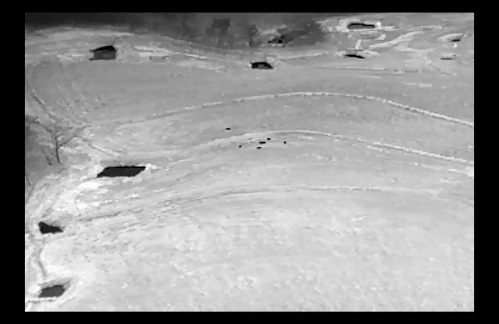 【ドローン活用事例】イノシシの所在を赤外線カメラにて撮影